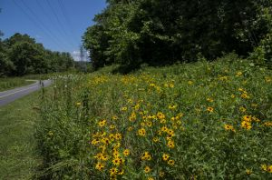 Yellow flowers along Oklahoma Greenway by Jock